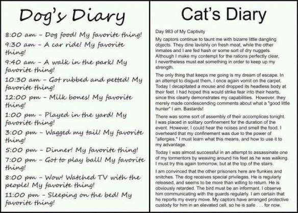 dog vs cat diary
