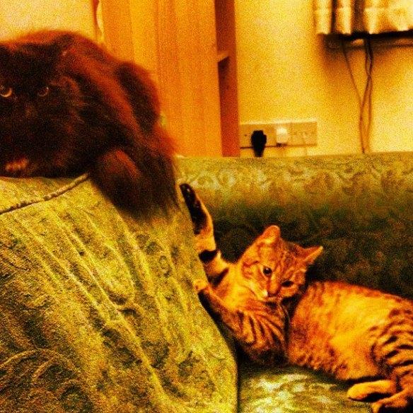 cleo and tiggy